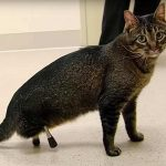 The Cat With Bionic 3D Printed Legs
