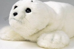 CI - Paro Seal