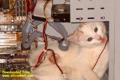 PC cat