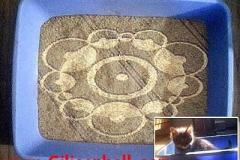 cat_circles