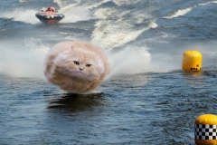 FP-Hover Cat