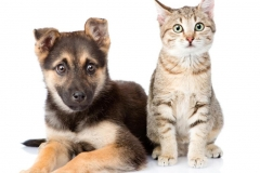FP-cat and dog.2