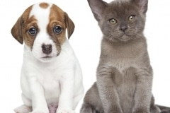 FP-cat and dog
