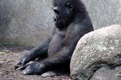 FP-sad-chimp