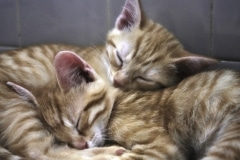 dreaming_cats