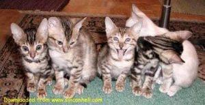 Kitten multiple