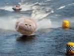 The Hover Cat Conundrum – would it float or fall