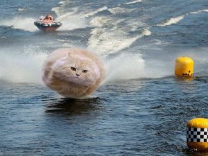 FP Hover Cat