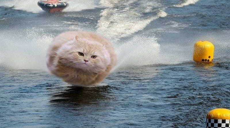 The Hover Cat Conundrum - would it float or fall