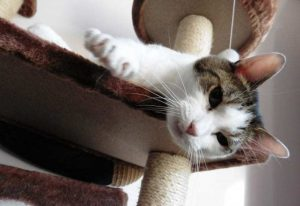 What Your Cats Ear Communications Mean