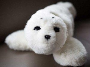 Meet Paro – The Robotic Seal