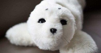Meet Paro - The Robotic Seal