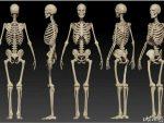 Simple Human Body Quiz