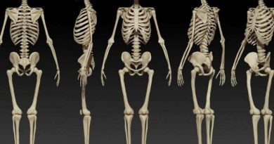 FP QZ human body skeleton
