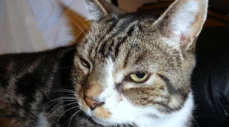 Cat Communications Guide