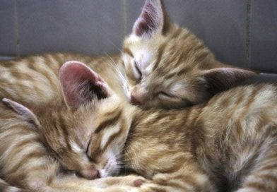 Do cats dream?