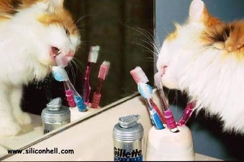 Why Your Toothbrush Spells Of Catnip