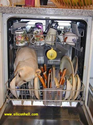 Dishwasher Prewash