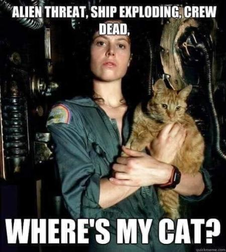 Funny Science Fiction the cat in alien