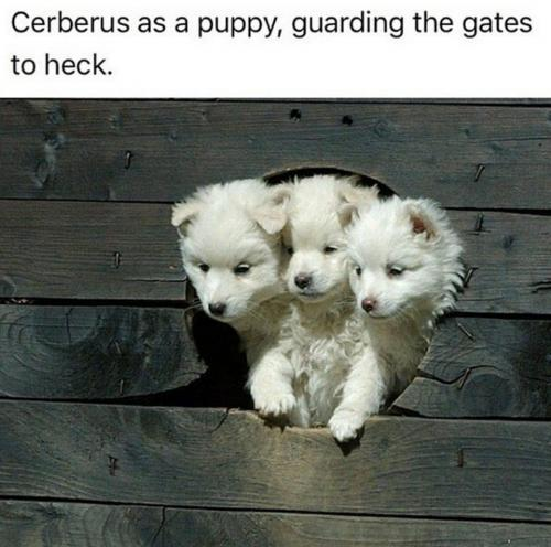 Cerberus the kitty