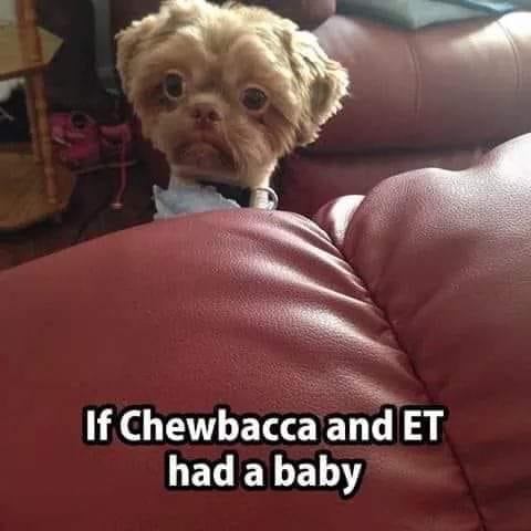 Chewbacca's baby