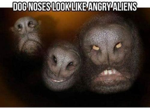 Funny dog's nose