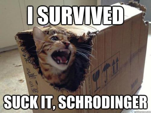 Schrödinger's cat survived