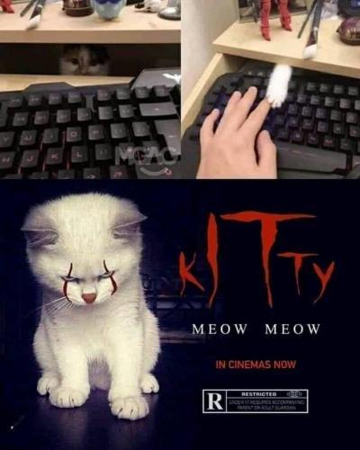Stephen Kings Kitty