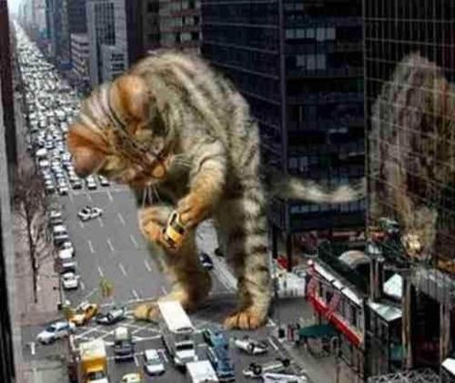 The joint cats from outer space